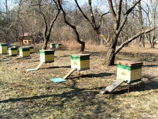 Пчелосемьи в алтайском крае купить